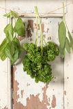 Basil- parsley- sage. Italian sweet basil, parsley, sage are hang on wooden window Royalty Free Stock Photo