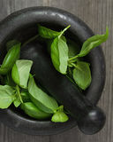 Basil in a Pestle and Mortar Royalty Free Stock Photography