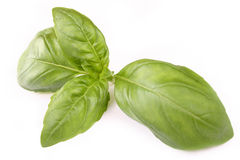 Basil plant Stock Photos