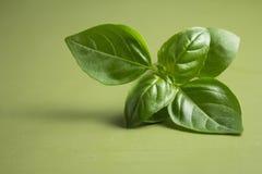Basil Plant Immagine Stock