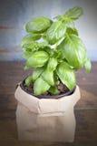 Basil Plant photographie stock