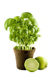 Basil plant & lime isolated on white Stock Photography