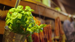 Basil Plant In Metallic Container stock footage