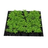 Basil Plants en el jardín en blanco ilustración 3D Imágenes de archivo libres de regalías