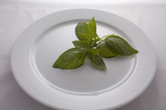 Basil on Plate Royalty Free Stock Image