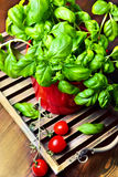 Basil in a pot with tomatoes Royalty Free Stock Photos