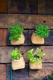 Basil Pots op een Muur Stock Foto