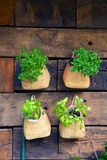 Basil Pots on a Wall Stock Photo
