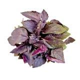 Basil purple bundle Royalty Free Stock Photos