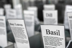Basil For Sale Royalty Free Stock Photos