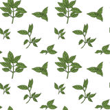 Basil seamless pattern. With sample in swatch panel (AI Royalty Free Stock Photos