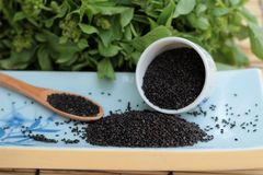 Basil seeds for fiber beverage and raw seed Stock Image