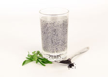 Basil seeds soak in water. Herb in Thai Stock Photography