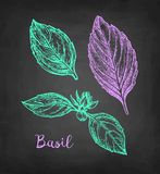 Chalk sketch of basil Royalty Free Stock Photo