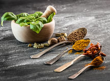 Basil and spices Royalty Free Stock Image
