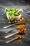Basil and spices Stock Image
