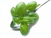 Basil on spoon Stock Photo
