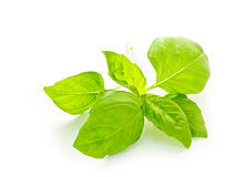 Basil sprig Stock Photos