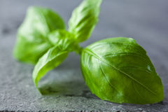 Basil on stone kitchen board Royalty Free Stock Photography