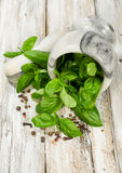 Basil in a stone mortar Stock Image