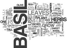 Basil The Sweet Herbword Cloud Royaltyfri Fotografi