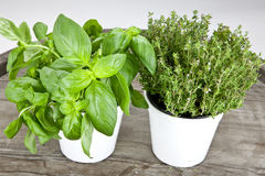 Basil and thyme. Fresh basil and fresh thyme in white pots on a wooden table Stock Image