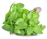 Basil tied in a bunch with twine isolated on white Stock Photos