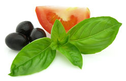 Basil with tomato and olives royalty free stock images