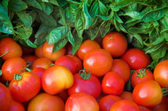 Basil & Tomatoes. Basil and tomatoes at the farmers' market stock photo