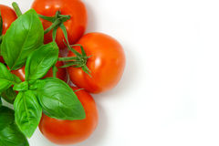 Basil and tomatoes. Mediterranean diet: fresh basil and tomatoes on the vine against a white background Royalty Free Stock Photo