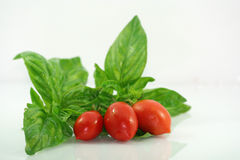Basil and Tomatoes Stock Images