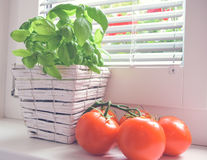 Basil and tomatoes,cherry tomato. Italian cuisine,basil and tomatoes royalty free stock image