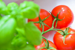 Basil and tomatoes,cherry tomato. Italian cuisine,basil and tomatoes stock image