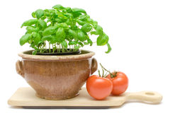 Basil and Tomatos Stock Photos