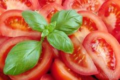 Basil and tomatos Stock Photography
