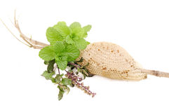 Basil (tulsi), mint and honey in group on isolated white Stock Image