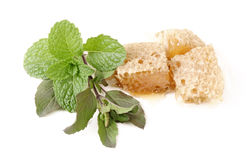 Basil (tulsi), mint and honey in group on isolated white Stock Photo