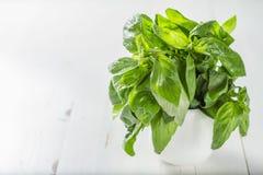 Basil in white bowl Stock Photos