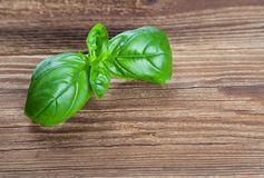 Basil on wood Royalty Free Stock Image