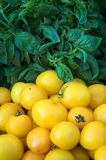 Basil & Yellow Tomatoes. Basil and tomatoes at a farmers' market stock photo