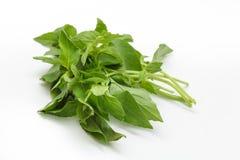 Basilic blanchi ou basilic de citron photo stock