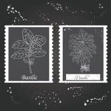 Basilic collection-02 Obrazy Stock