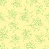 Basilic collection-03 Zdjęcie Royalty Free