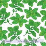 Basilic collection-06 Stock Photo