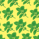 Basilic collection Stock Photo