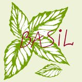 Basilic de logo Photographie stock libre de droits