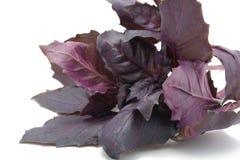 Basilic doux Images stock