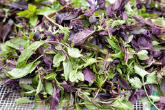 Basilic et verdure frais photos stock