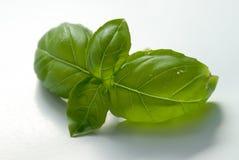 Basilic frais Photos libres de droits