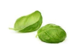 Basilic frais Images stock